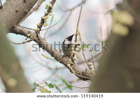 bird on tree at spring time