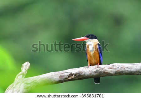 Bird picture / Kingfisher
