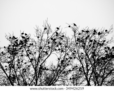 Birds and trees, abstract bare trees branches canopy - stock photo