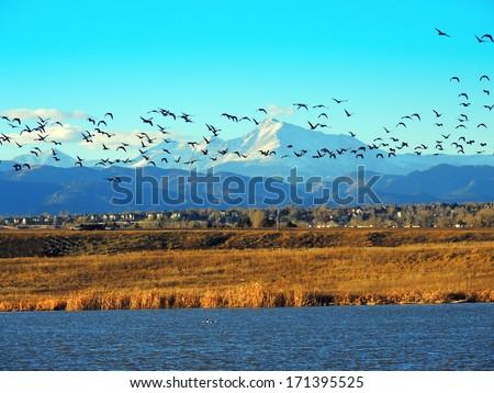 birds in flight over stearns  lake, near broomfield, colorado    - stock photo