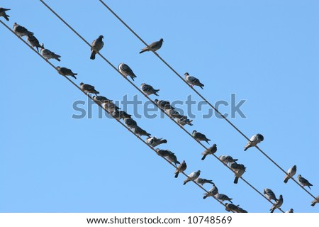 ?Birds on the wire