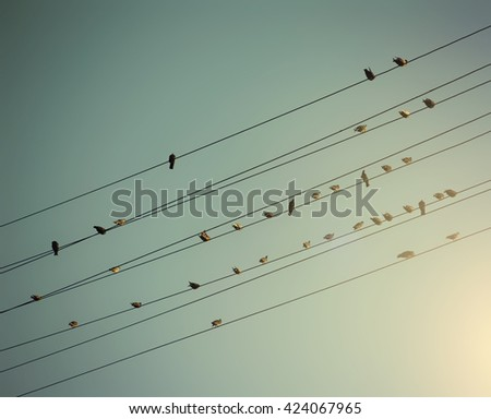 birds on wires over a dreamy sunset sky background toned with a vintage retro instagram filter app or action effect  - stock photo