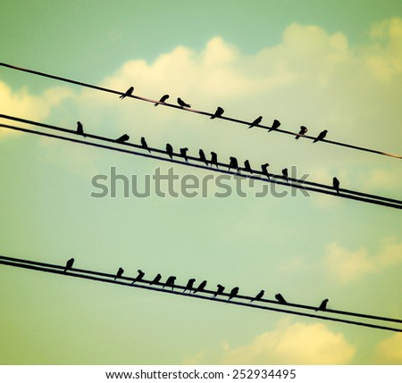 birds on wires over blue sky with clouds background toned with a vintage retro instagram filter  - stock photo