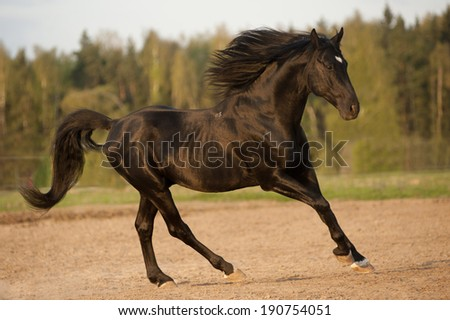 black stallion in sunset - stock photo