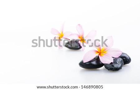 black zen stone with white Frangipani flower - stock photo