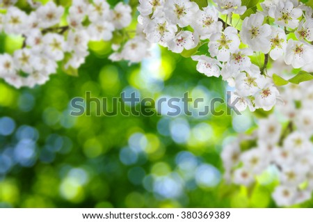 Blossoms over blurred nature background. Spring flowers.Spring background with green bokeh - stock photo