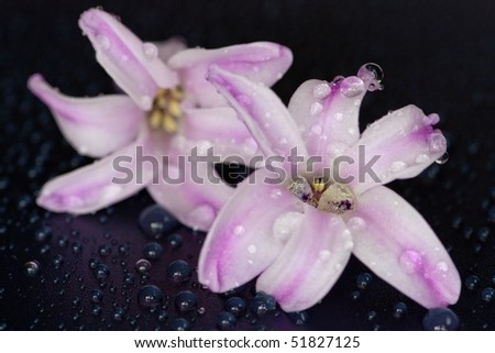blossoms with water drops - stock photo