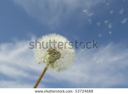 Blow ball and seeds. - stock photo