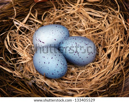 blue eggs in nest - stock photo