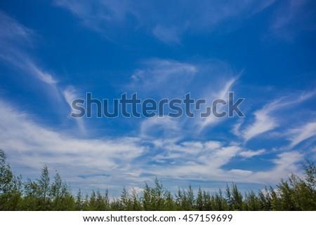 Blue sky and trees. Blue sky and grasslands. - stock photo