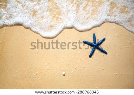 Blue starfish on the sandy coast - stock photo