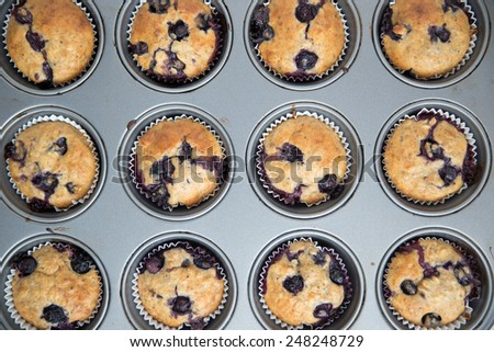 blueberry muffins  - stock photo