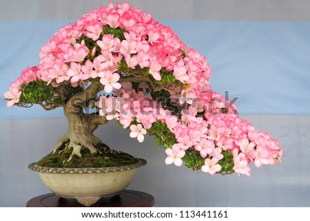 Bonsai potted tree # 2 - stock photo