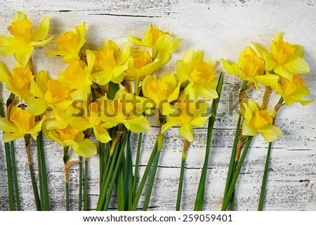 bouquet of fresh spring narcissus flowers on white wooden background - stock photo