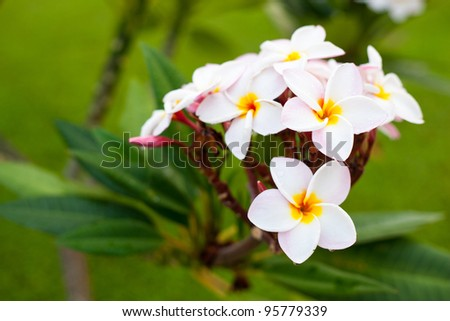 bouquet of white flowers, white flowers blossoming on the trees. - stock photo