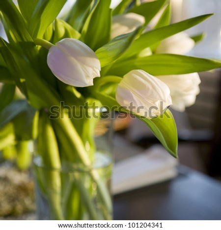 Bouquet of white  tulip  in vase of glass. Decoration of dining table. - stock photo