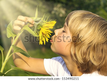 Boy smelling a sunflower - stock photo
