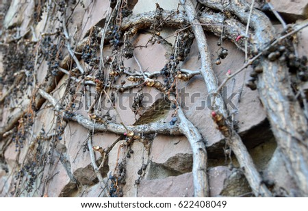 Branches of a weaving plant on the wall