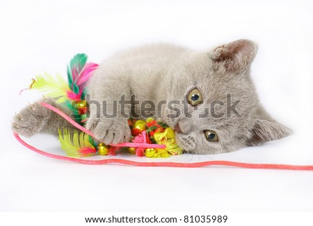 British kittens with toy on white background - stock photo