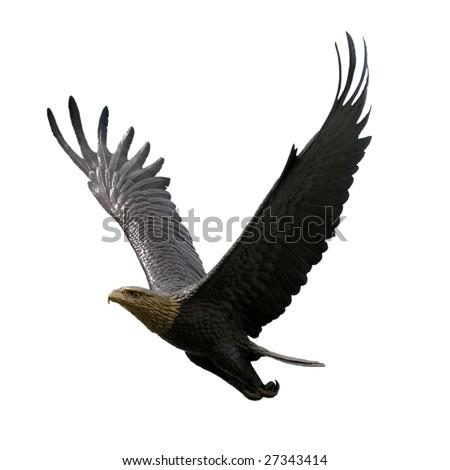 Bronze replica of the famous bird, isolated. - stock photo