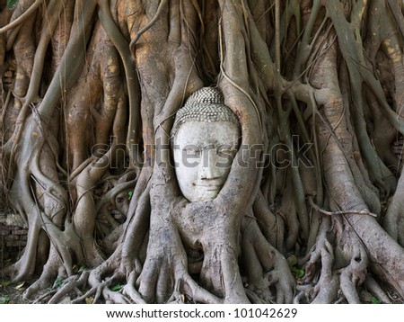 Buddha statue in the roots of tree at , Ayutthaya, Thailand