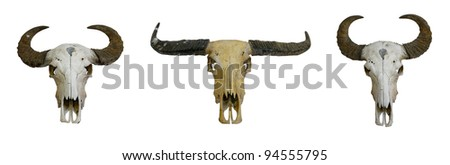 3 buffalo skull with horns on white - stock photo