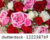 bunch of red and pink roses - stock