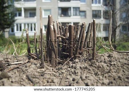 bushes stumps in the city - stock photo