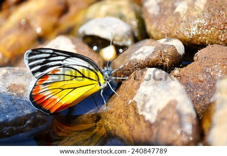 butterfly at the  river.Beautiful butterfly wings.