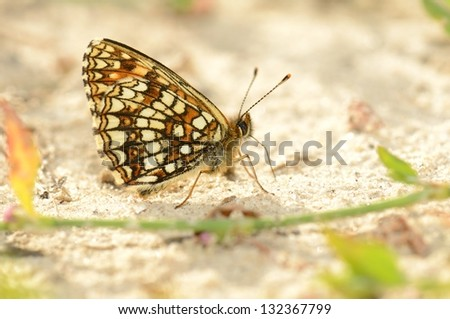 Butterfly  perched on a leaf. - stock photo