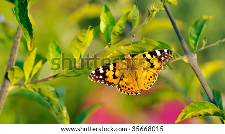 Butterfly with open wings resting on a stem in the early hours of the morning