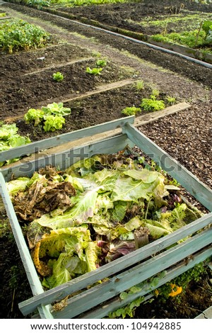 Cabbage leaves on a compost heap - stock photo