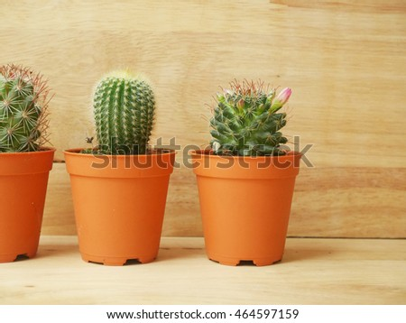 Cactus Plants on  Wood Background Texture