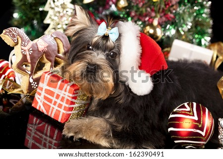cake in the shape of horses and yorkshire terrier puppy in a santa hat - stock photo