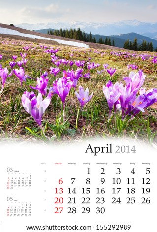 2014 Calendar. April. Blossom of crocuses in spring in the mountains - stock photo