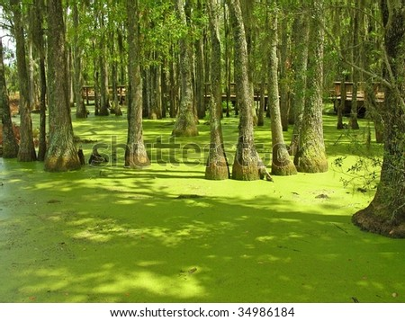 Carolina swamp - stock photo