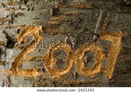 2007 carved in an old tree - stock photo