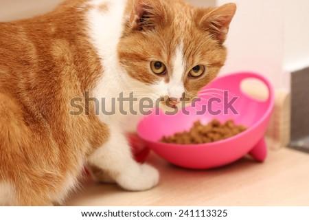 cat eat - stock photo