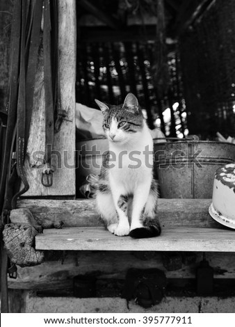 Cat in rural yard (black and white) - stock photo