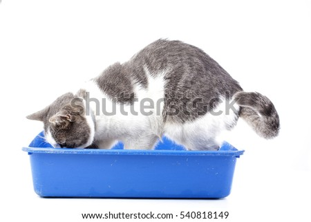 best soft cat food for senior cats
