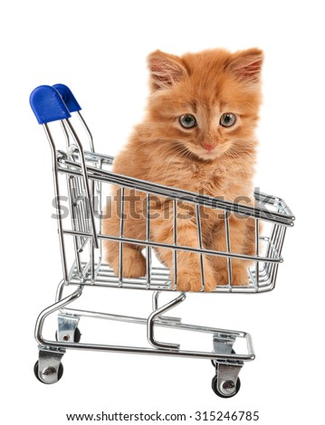 cat is sitting in the shopping cart. isolated - stock photo