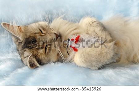 Cat sleeps holding a toy mouse - stock photo
