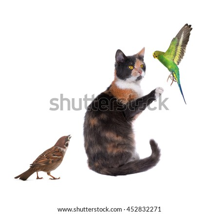 cat trainer of a budgie on a white background - stock photo