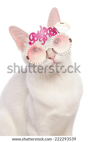 cat wearing bride to be glasses cutout - stock photo