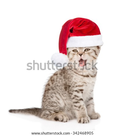 cat with open mouth in red santa hats. isolated on white background - stock photo
