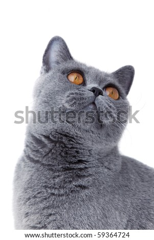 cat with yellow eyes isolated on white background - stock photo