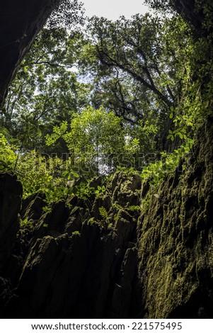 Cave in the Gunung Mulu National Park, Borneo, Malaysia - stock photo
