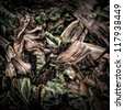 Chard Waste on a Compost Heap/Artistically alienated to create a grungy somber atmosphere - stock photo