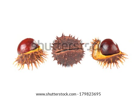 chestnuts isolated on a white background, - stock photo