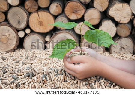 Childes hands protect a young tree  in pellets - stock photo